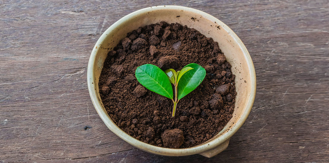 a bowl of coffee ground compost